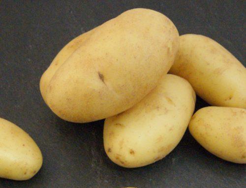 Asperge-aardappelen nu leverbaar!