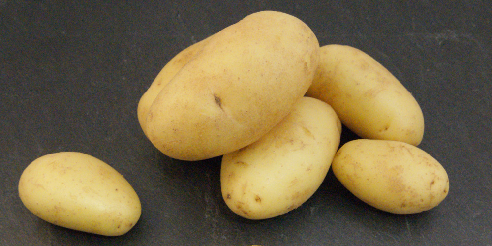 Jac van den Oord Potatoes presenteert Asperge Aardappelen