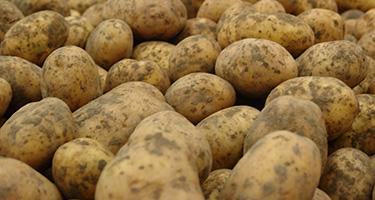 Pof- en Grillaardappelen van Jac van den Oord Potatoes